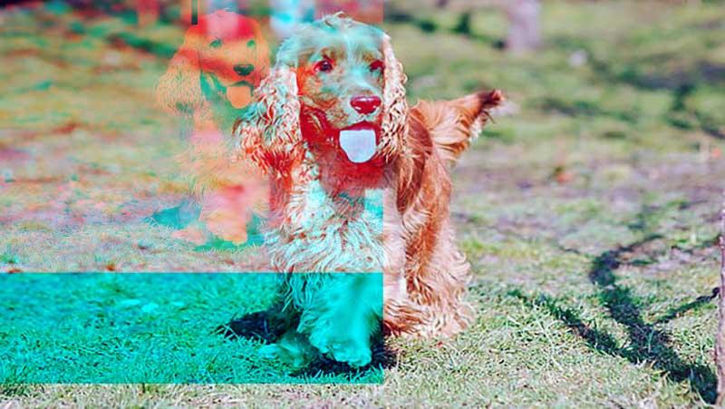 cocker perro