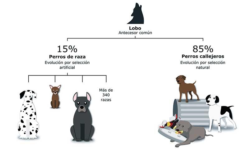 evolucion de los perros
