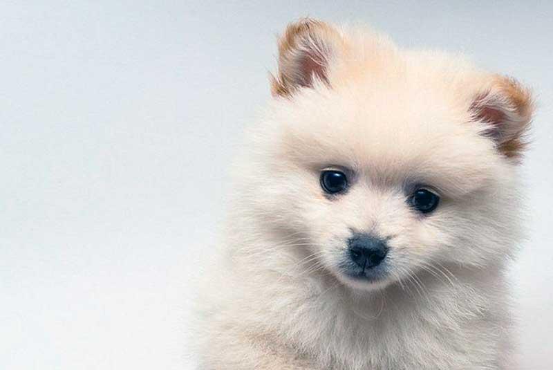 perritos pequeños