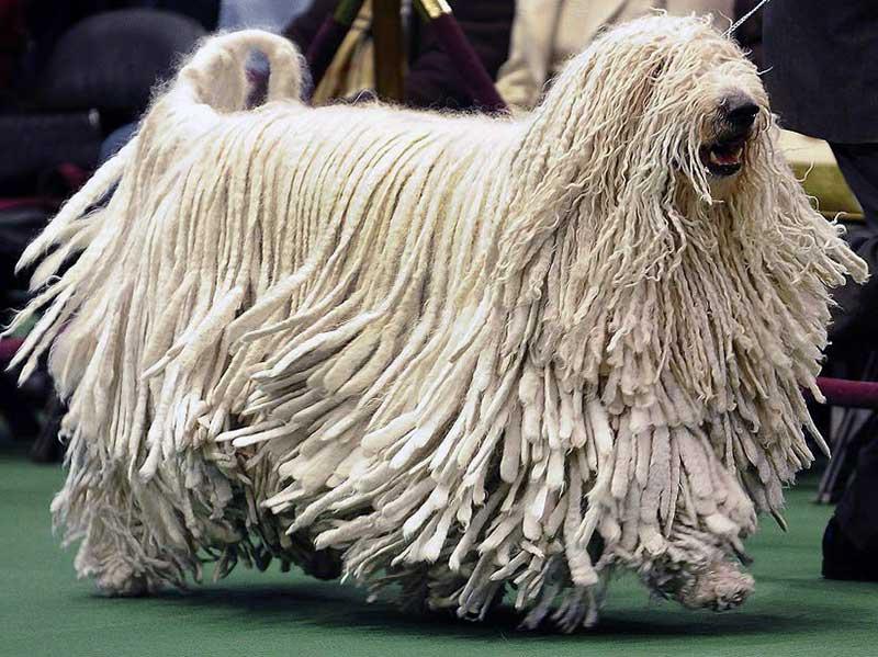 perros grandes peludos