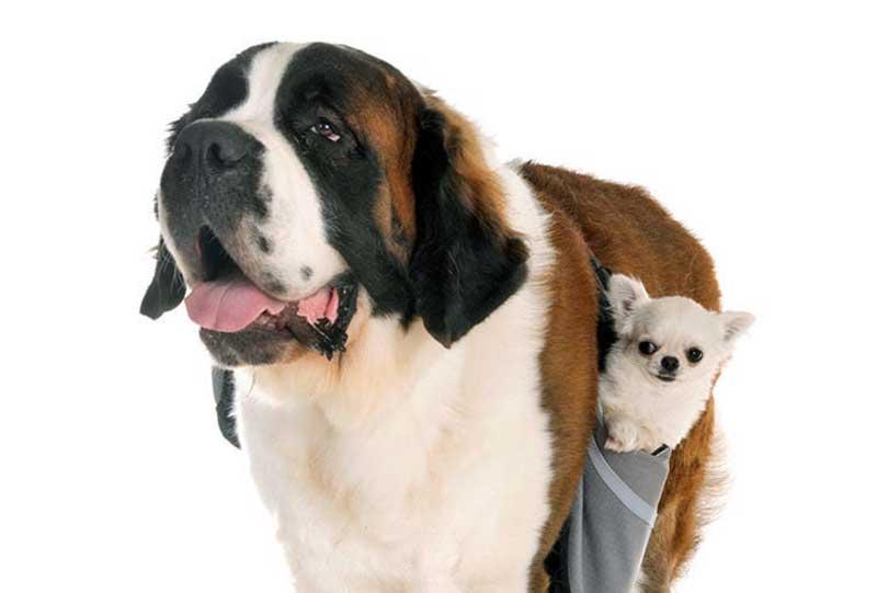 tipos de razas de perros