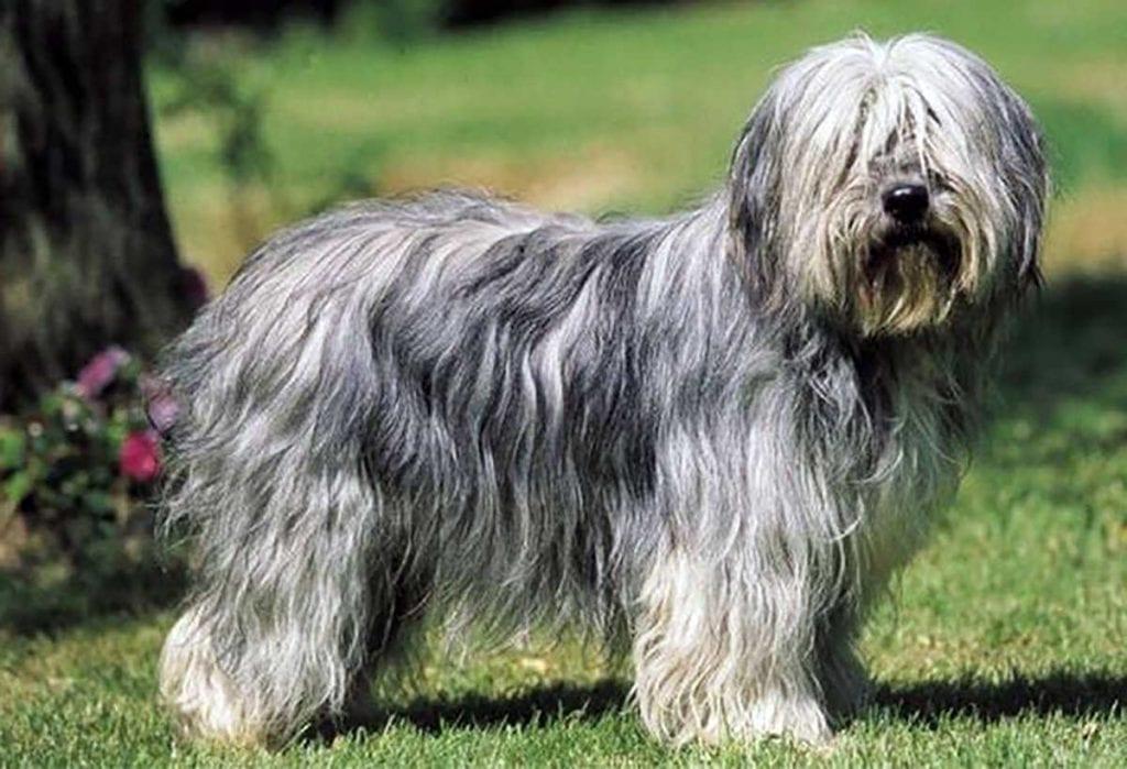 fotos de gos d atura
