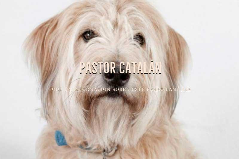 razas de perros pastor catalan