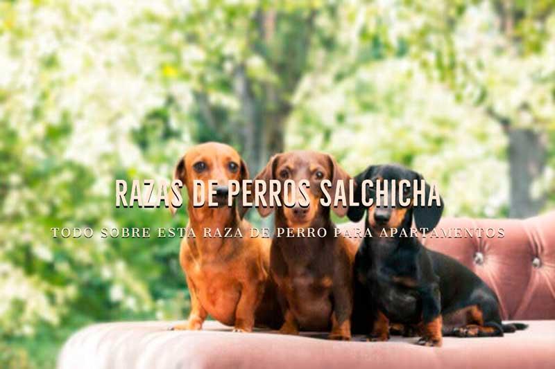 razas de perros salchicha